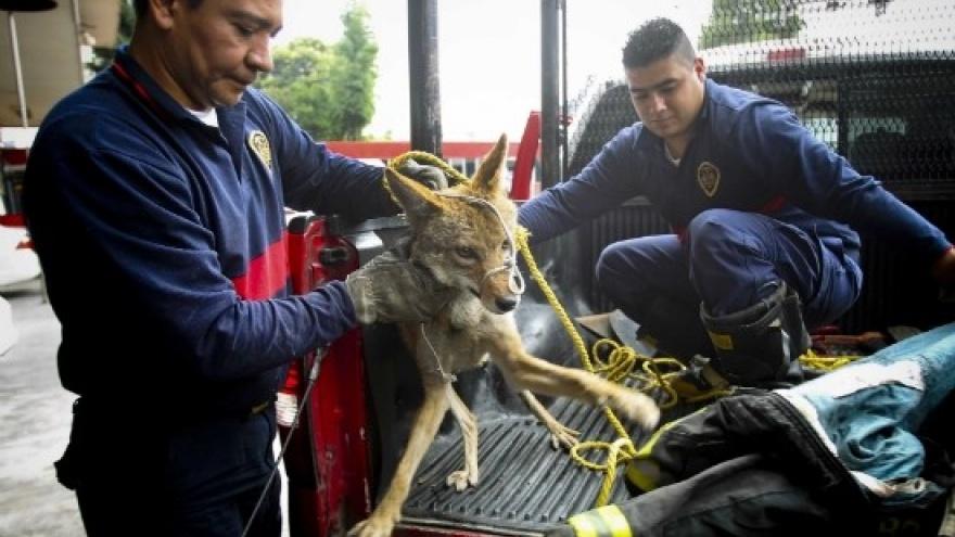 Retiro y captura de fauna